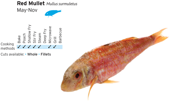 Red mullet a thompson jnr for Red mullet fish